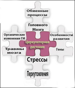 Нейроциркуляторная дистония.